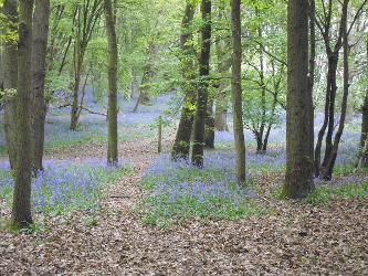 An image relating to Sherrards Park Guided Walks