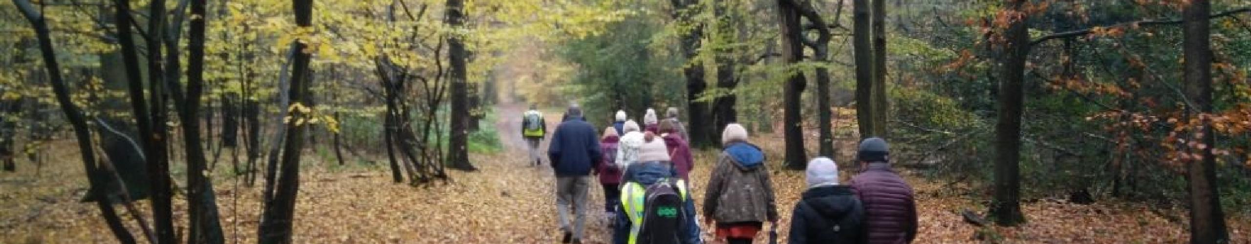 An image of a Health Walk taking place in Welwyn Garden City.